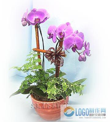 蝴蝶蓝花图片图片